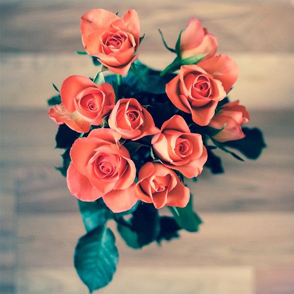 消臭効果のある花の画像